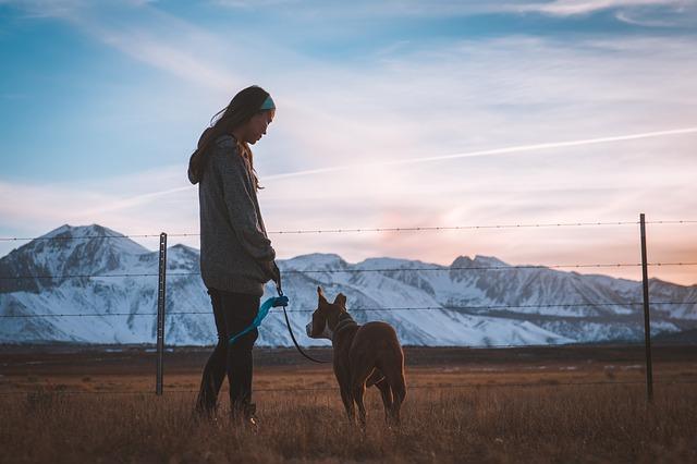 דברים שכדאי לקחת בחשבון בבחירת גדר לכלבך